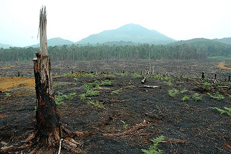 Forest fire-Palm oil plantation