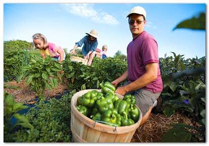 organic_farmers1