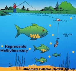 Mercury Bioaccumulation in Fish