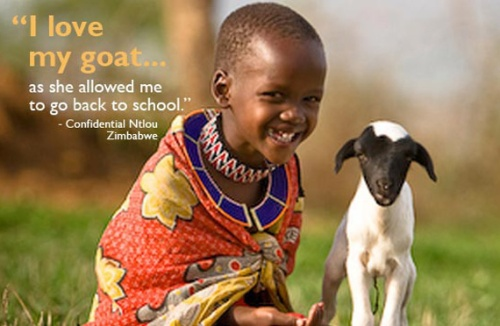 oxfam_goat