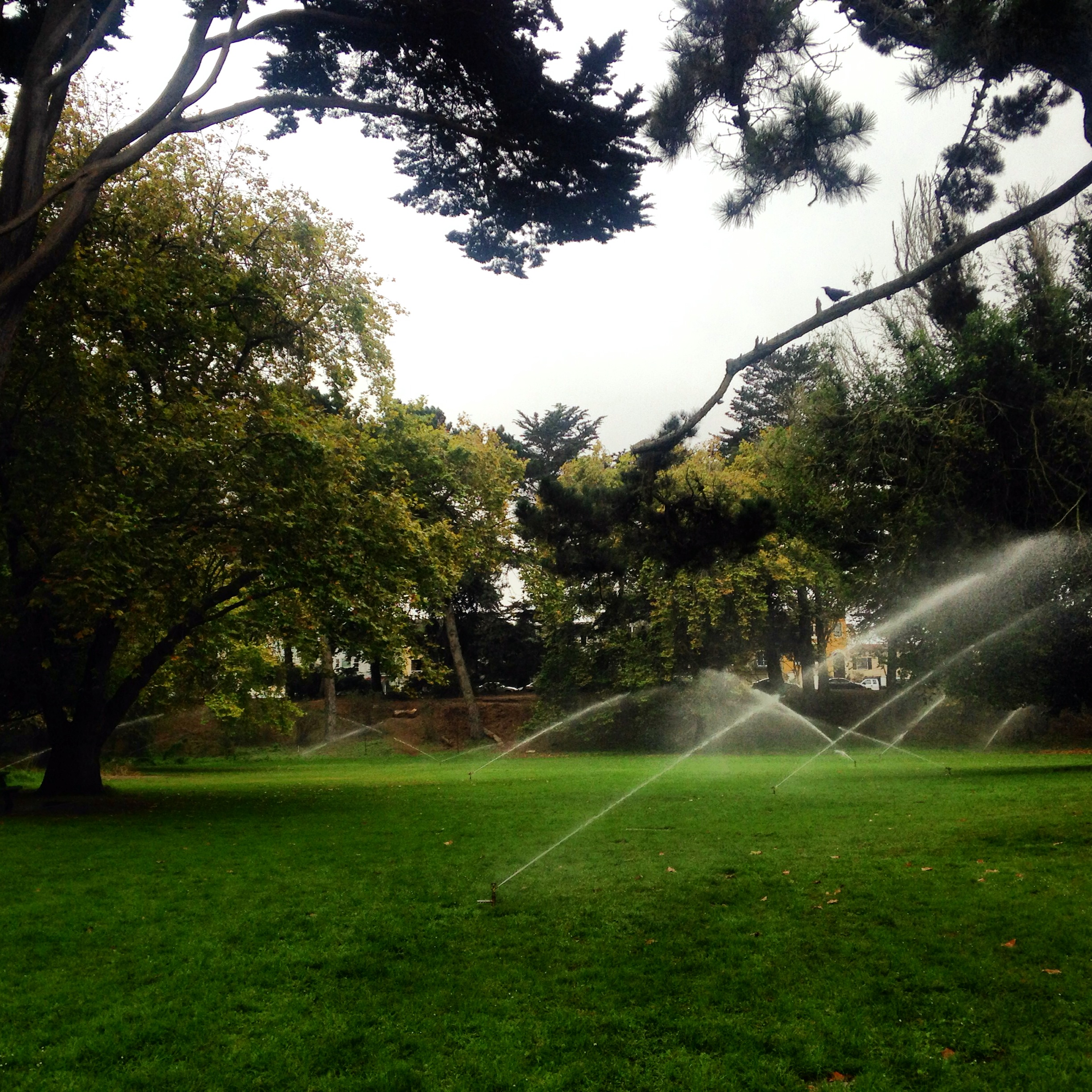 Water water everywhere but not a drop to drink ecotoad golden gate park san francisco biocorpaavc